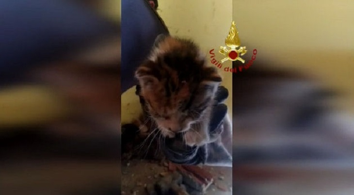 gattini intrappolati intercapedine