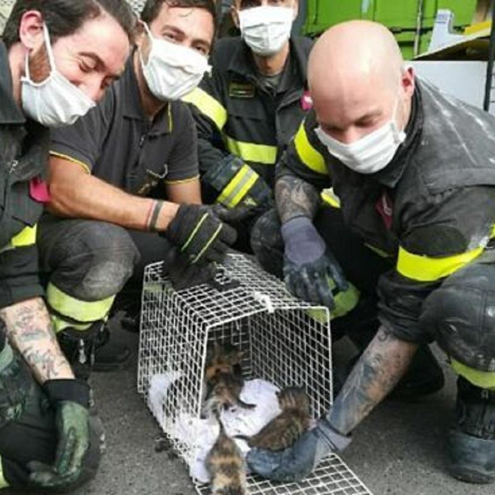 gattini salvati vigili del fuoco