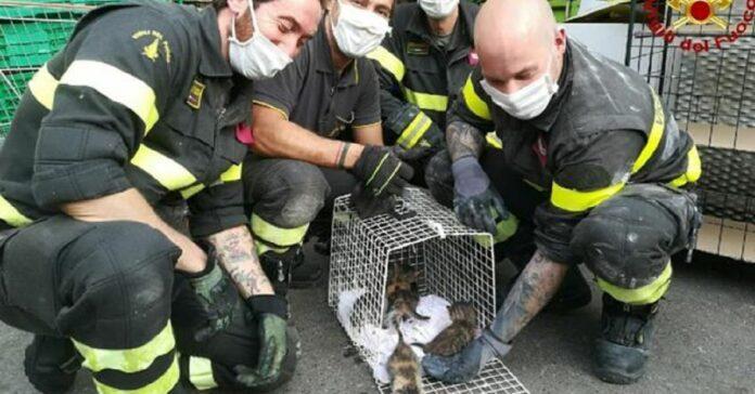 5 gattini salvataggio supermercato torino
