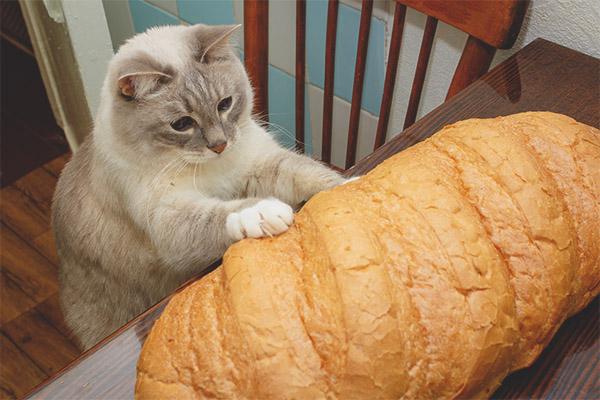 gattino che tocca il pane