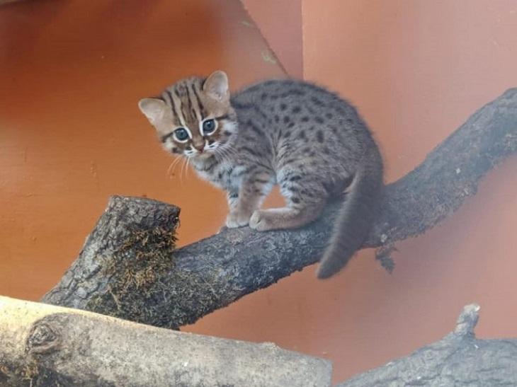 gatti rugginosi santuario