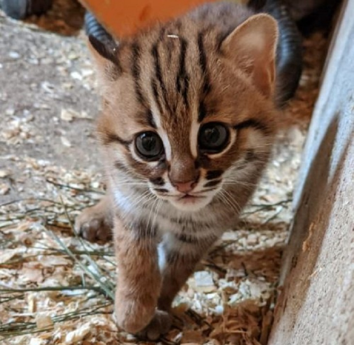 gatti rugginosi speranza