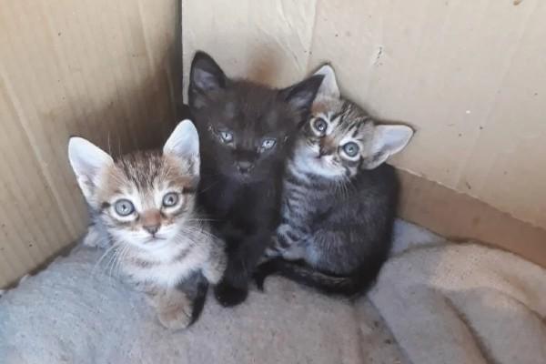 tre cuccioli