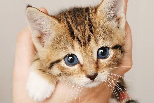 gattino in mano