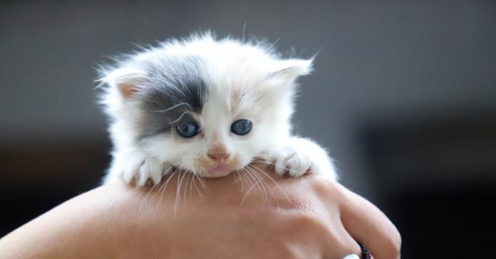 gattino abbandonato dalla madre