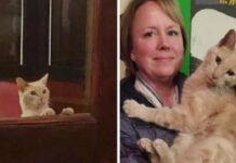 gattino adottato coppia durante cena