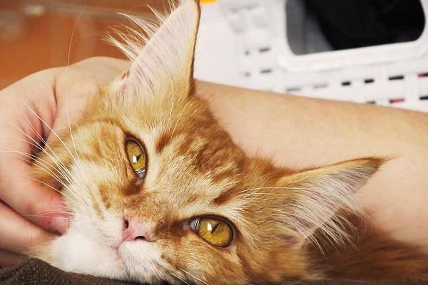 carezze al gatto