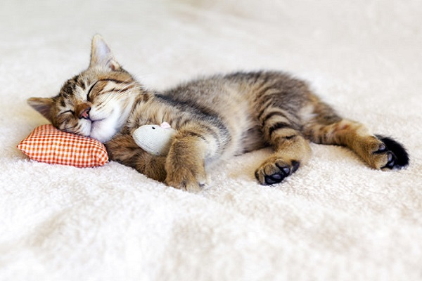 gattino che dorme su letto