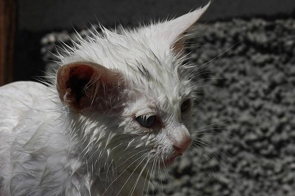 gatto bagnato per strada