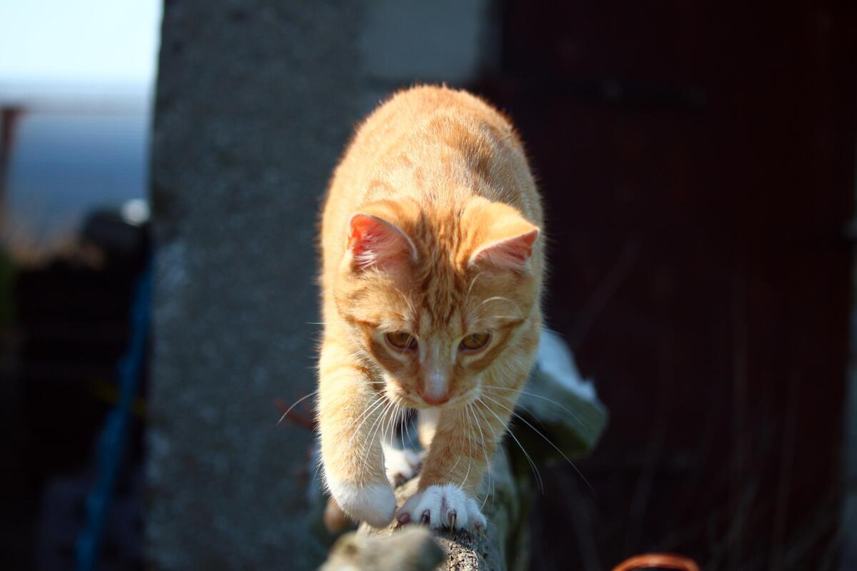 gattino su tronco d'albero