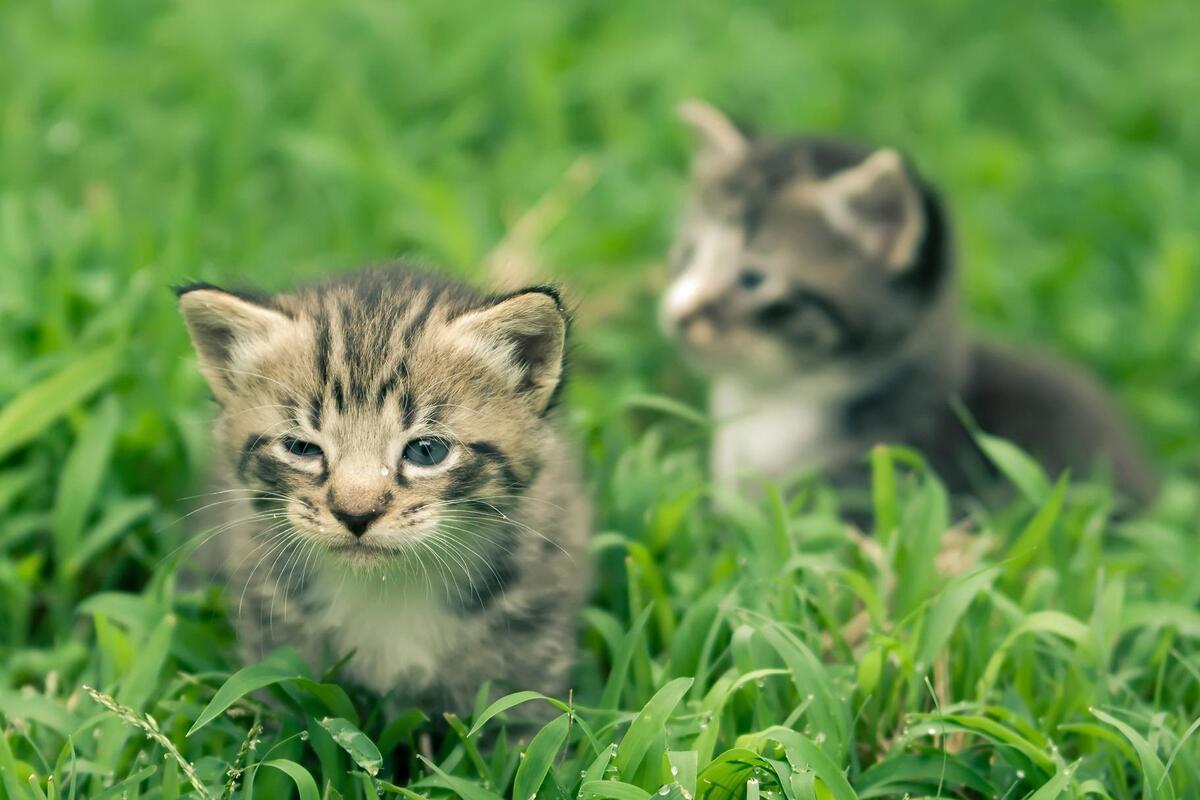gattini in mezzo al prato