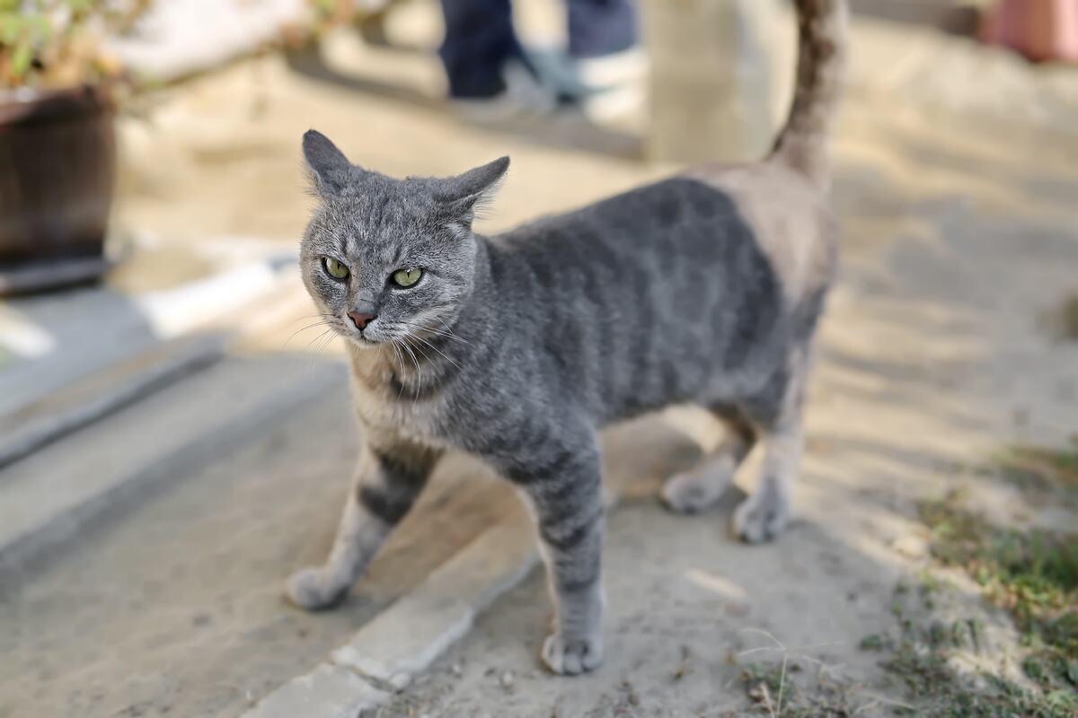 gattino in piedi