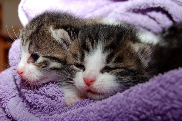 gattini avvolti in una coperta