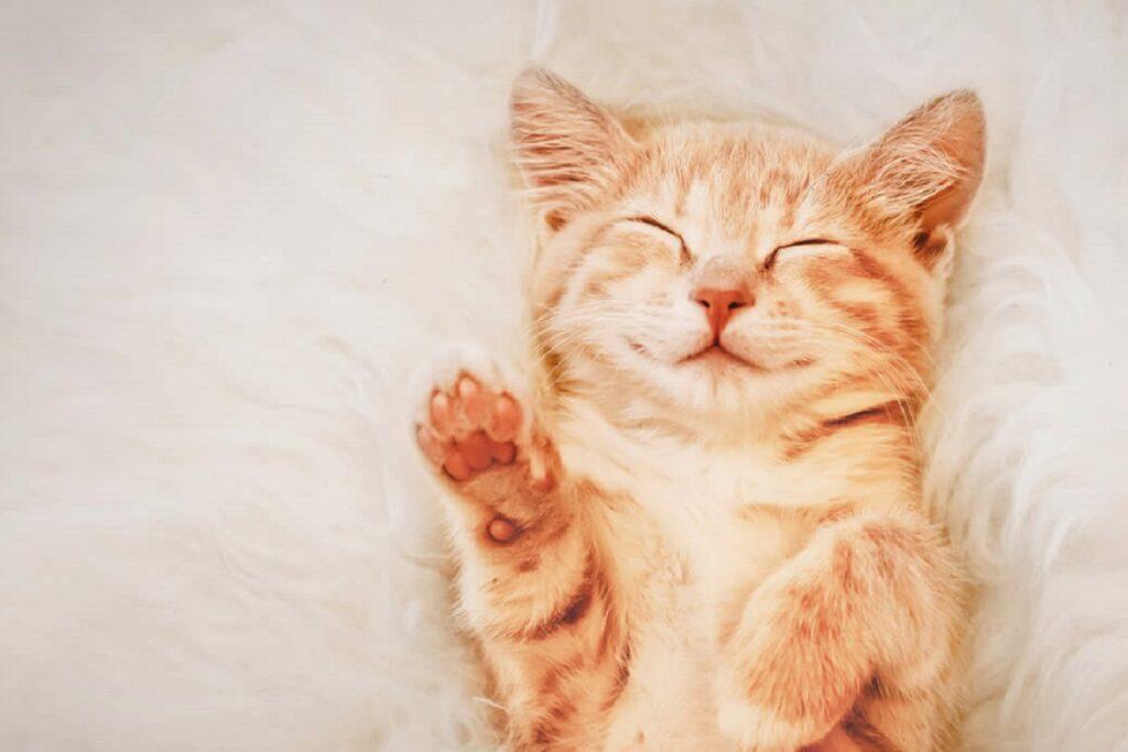 gattino rosso disteso