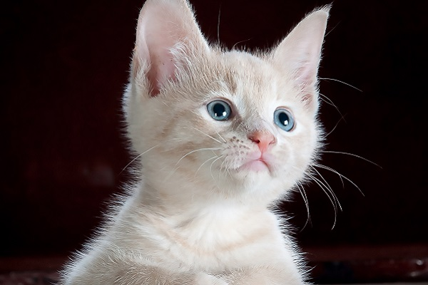 gattino incuriosito