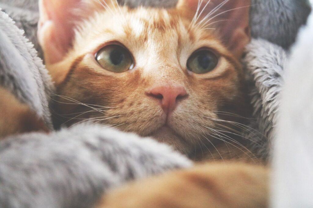 gattino dispettoso