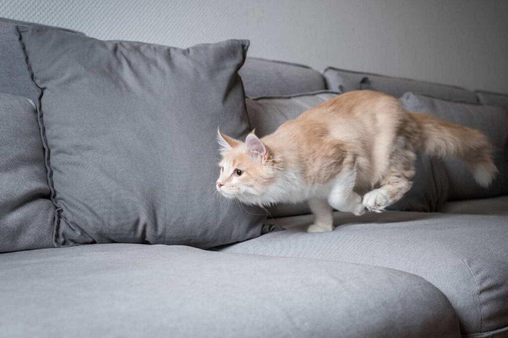 gattino corre sul divano