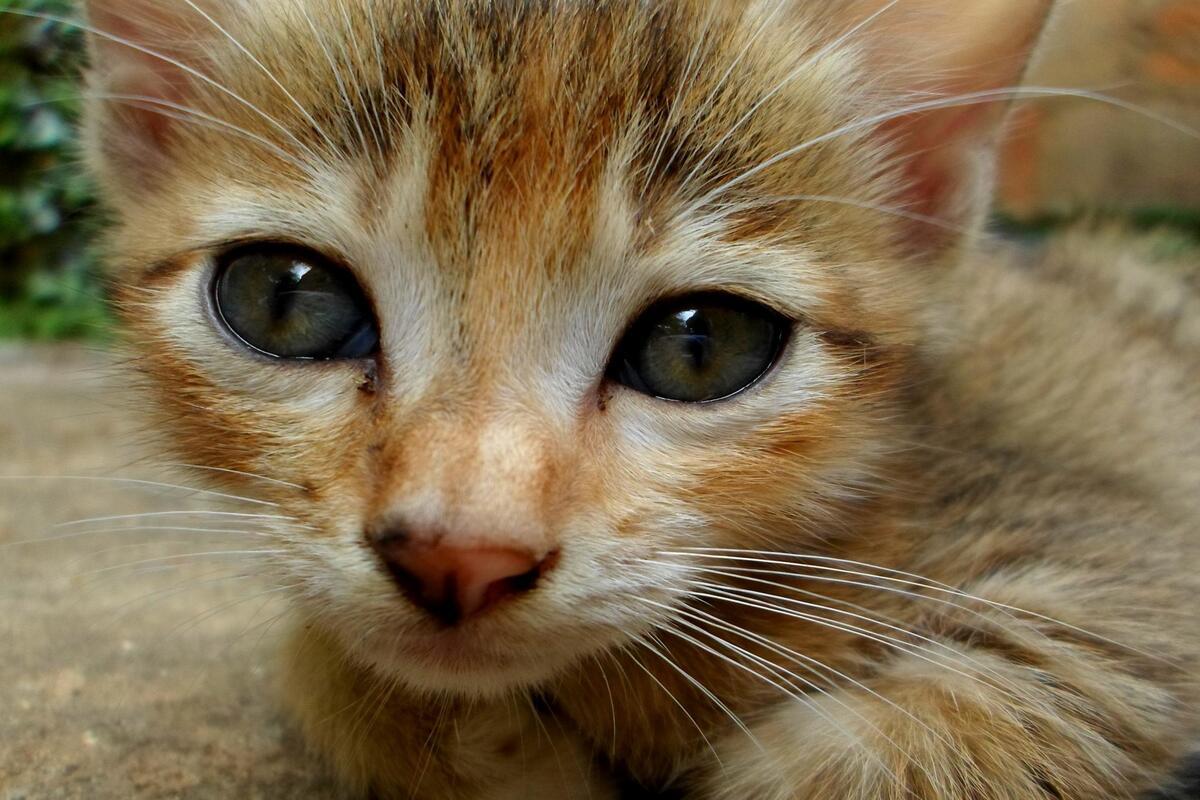 gattino con occhi tristi