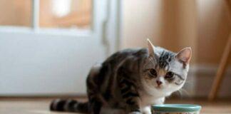 gatto e ciotola