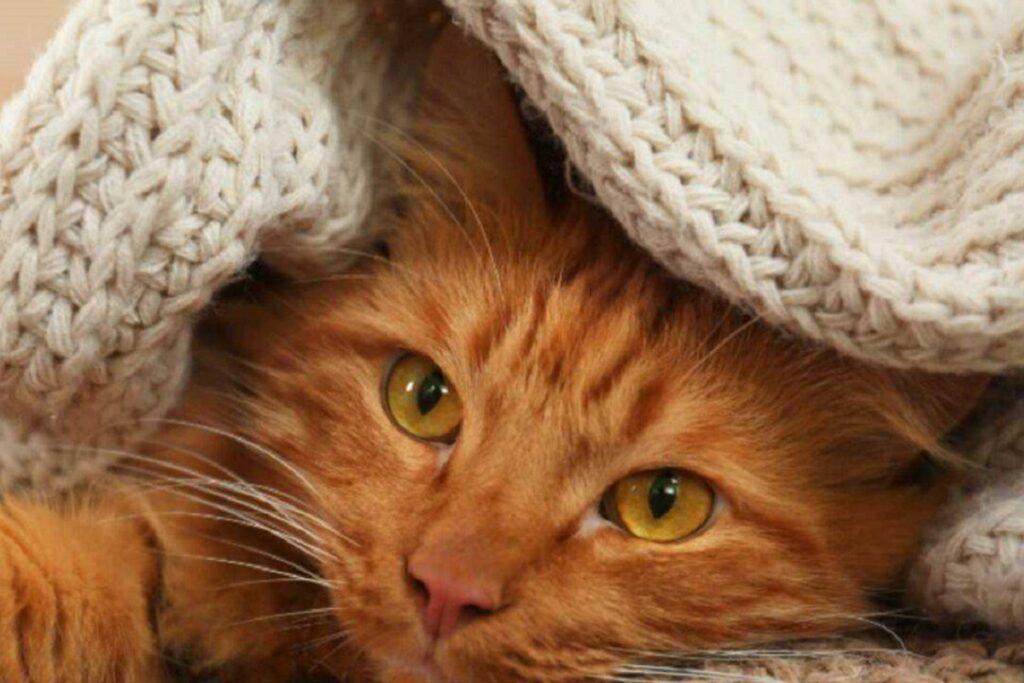 gattino sotto le coperte