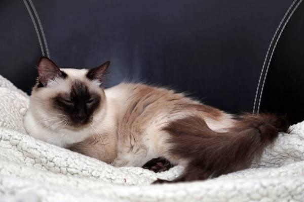 gatto che riposa su una coperta calda
