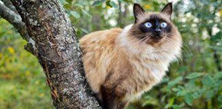 gatto che si arrampica su un albero
