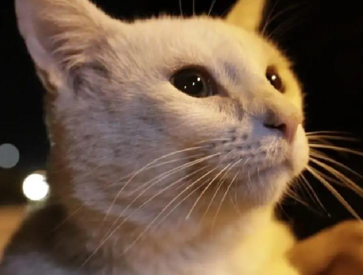 conejo gattino sopravvivenza