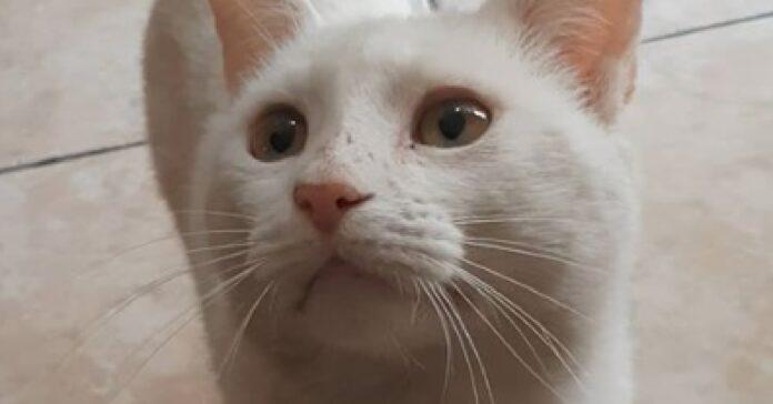 conejo gatto chiede cibo fuori supermercato