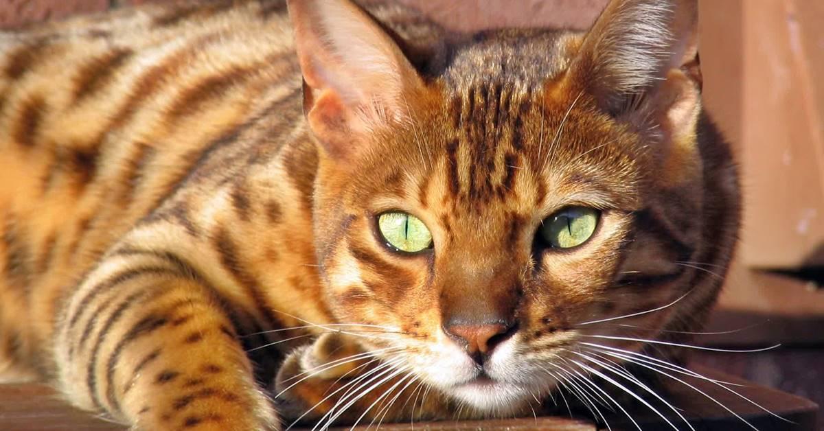 gatto a cui piace stare al sole