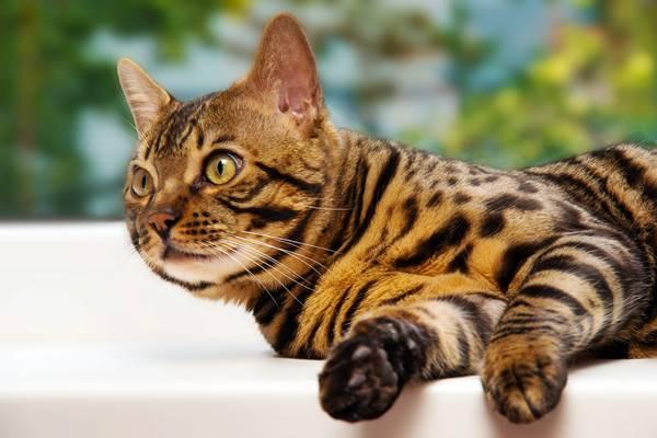 gatto che riposa sul davanzale