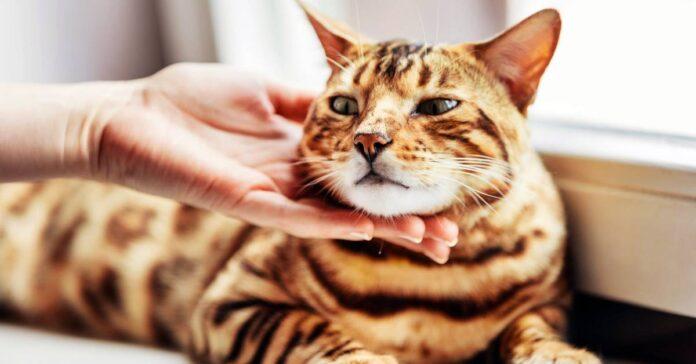 dare una carezza al gatto