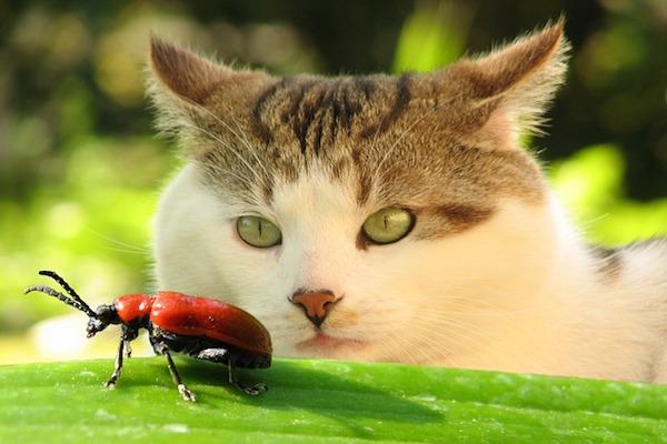 gatto incuriosito da insetto