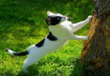gatto caccia cicala
