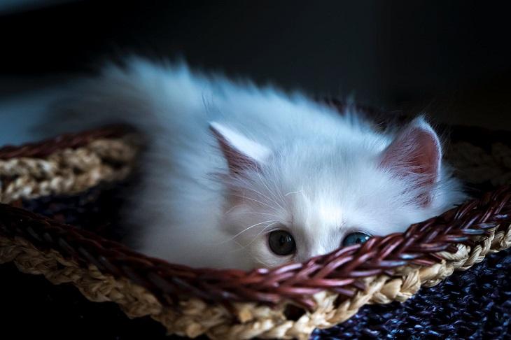 gatto in grado rubarci cuore