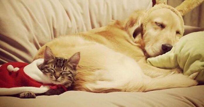 ichimi ponzu affetto gatto