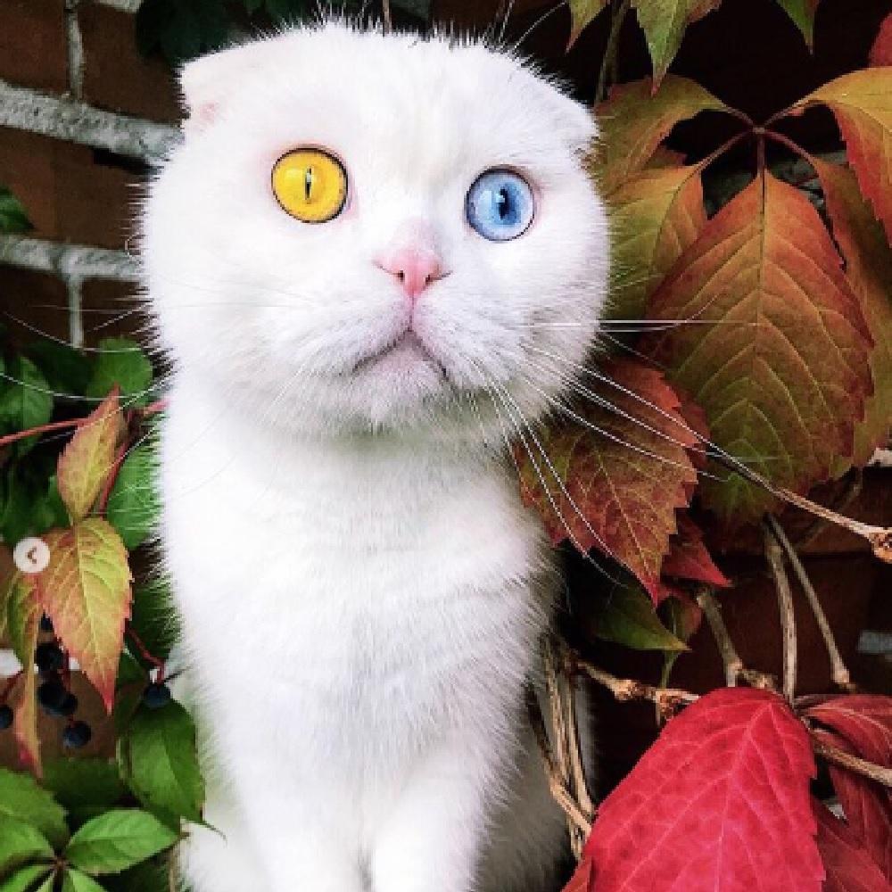 joseph gatto famoso social eterocromia