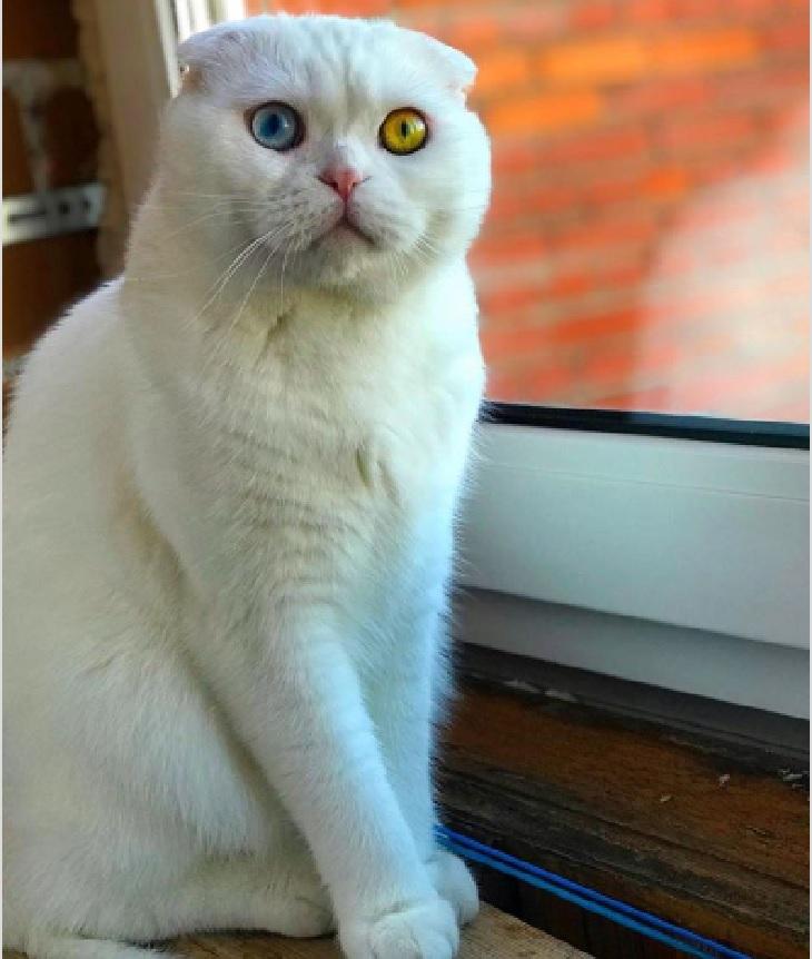 joseph gatto vivace