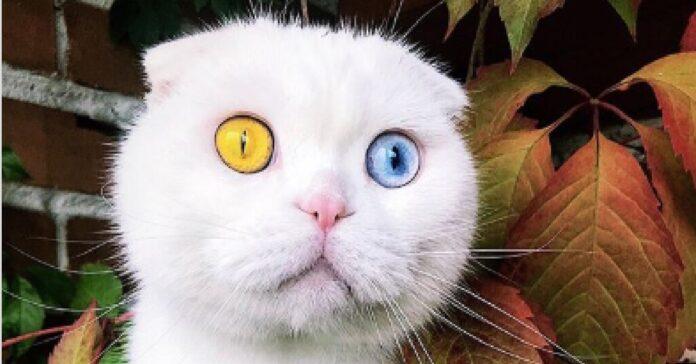joseph gattino russia star del web