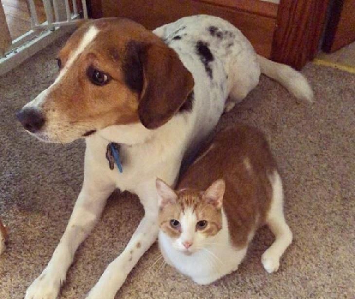 taffy gatto cane casa