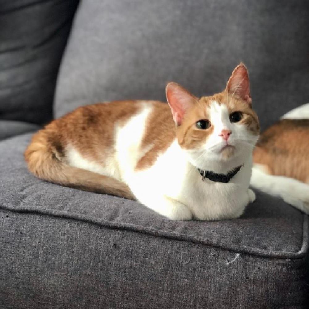 taffy super gatto