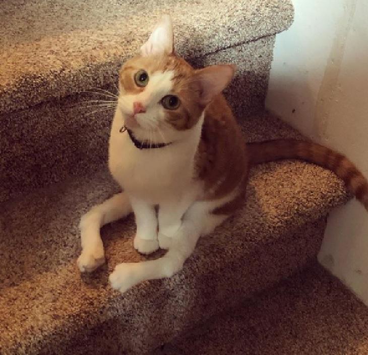 taffy gatto storia vita