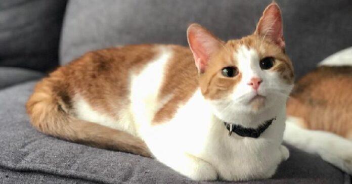 taffy gatto incredibile forza volontà