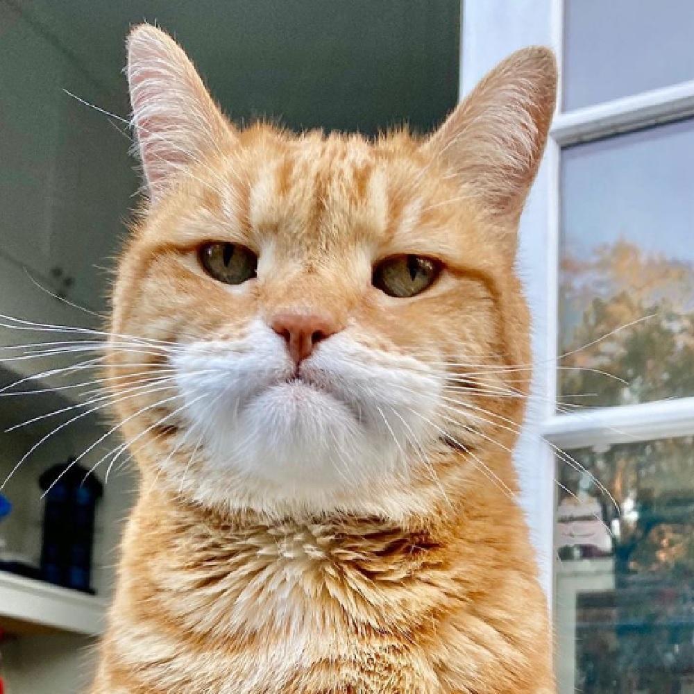 marley gatto faccia