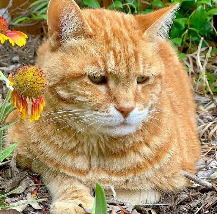 marley gatto aria aperta