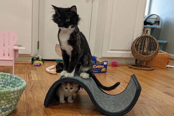 bunny gatta gattini