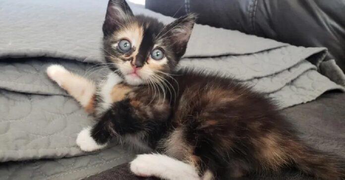 charm gattino adottato video