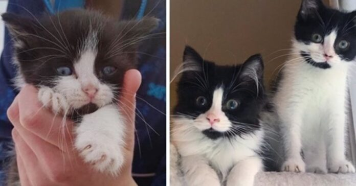 gattini identici