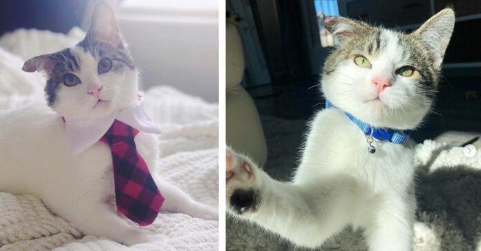 Gattino con orecchio tagliato