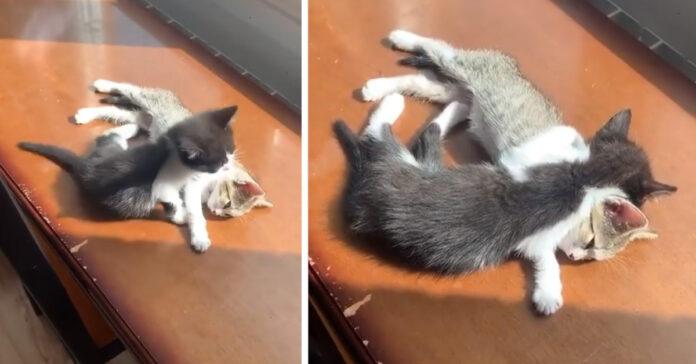 Due gattini dormono abbracciati