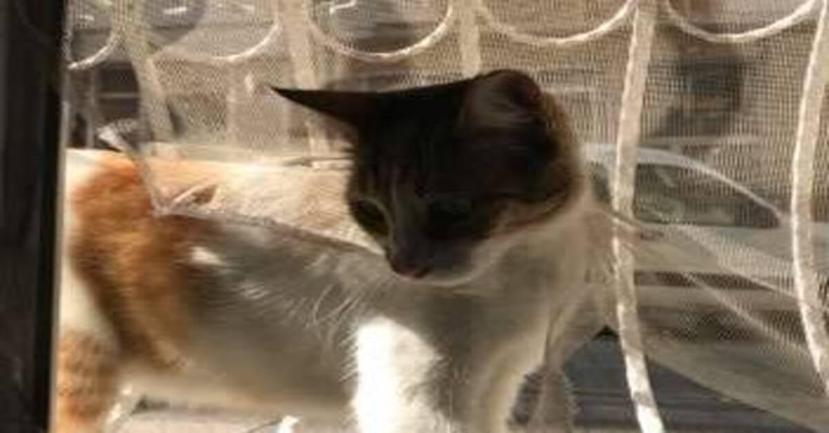 gatto su una finestra